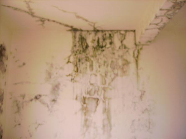 漏水屋一造成樓下壁癌