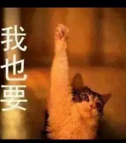 20140927貓咪-1