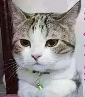 20150425-1可愛的貓咪-1