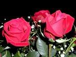 20150628-玫瑰花之膠原蛋白篇