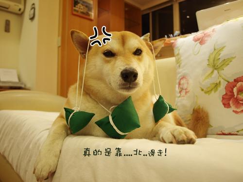 肥貓胖狗的鄉村小窩 狗狗粽子圖1.jpg