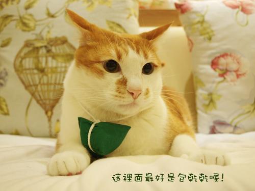 肥貓胖狗的鄉村小窩 狗狗粽子圖2.jpg
