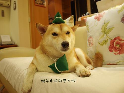 肥貓胖狗的鄉村小窩 狗狗粽子圖8.jpg
