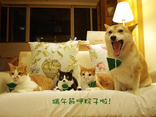 肥貓胖狗的鄉村小窩 狗狗粽子圖大家.jpg