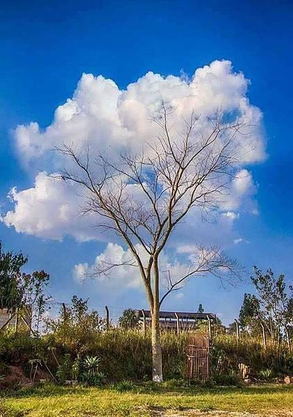 雲樹.jpg