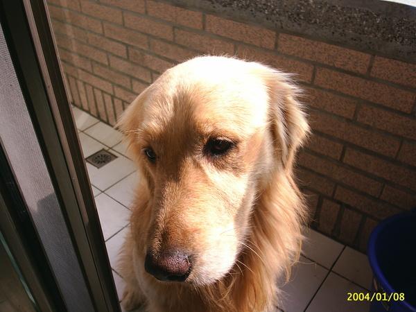 我的ㄉ狗狗~