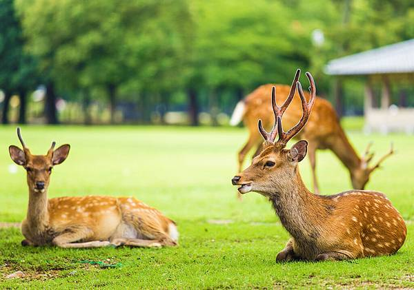 奈良公園-奈良市-近畿.jpg