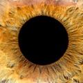 人的眼睛.jpg
