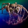 高科技跳躍運動員:DVD光盤上的蜘蛛.jpg