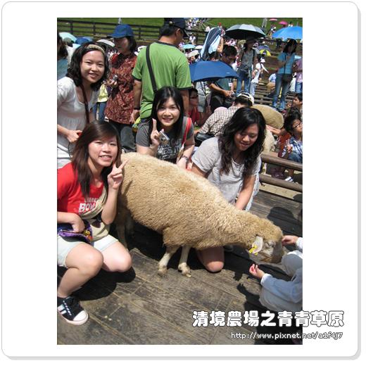 羊而不要跑~