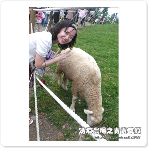 要跟羊兒合照真困難啊~