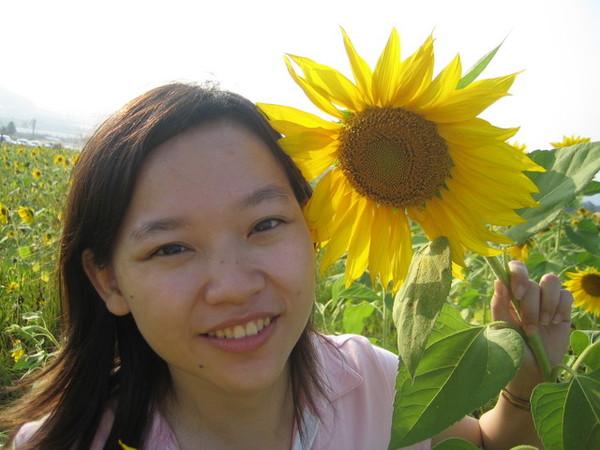 好大的向日葵!!