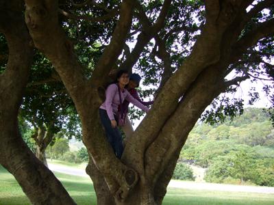 爬樹的大姐二姐
