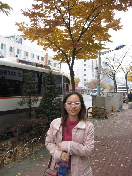 韓國街道上處處可見的銀杏~好美!
