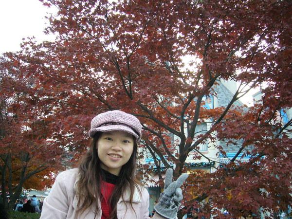 很美的楓樹