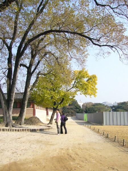 景福宮之樹