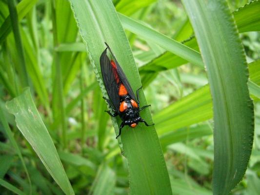 那裡四處可見長的很像蟬的昆蟲