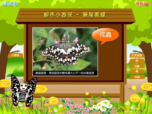 蝴蝶介紹-成蟲.jpg