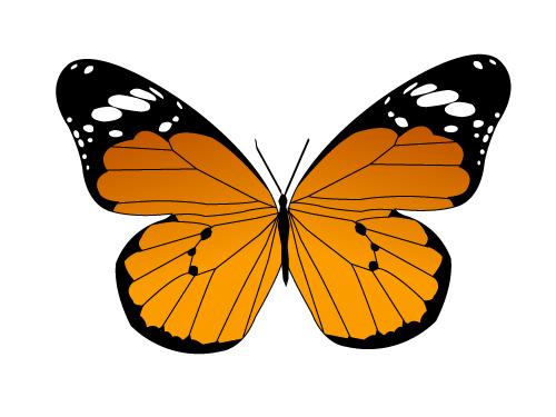 樺斑蝶.jpg