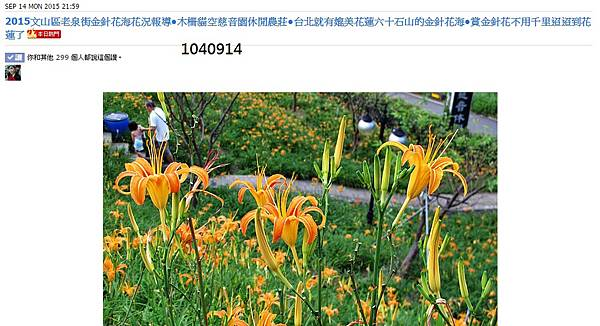 本日熱門-木柵金針花海-1040914