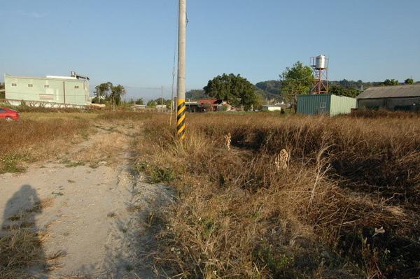 豐原綠色步道旁農地3.jpg