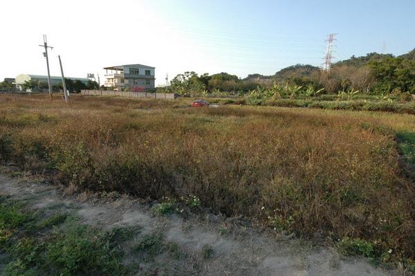 豐原綠色步道旁農地1.jpg