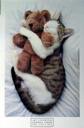 第十一式:懷抱小熊型