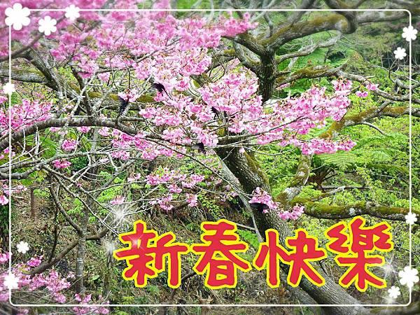 新春快樂.jpg