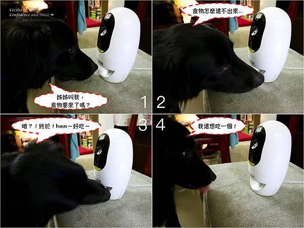 狗狗等待零食.jpg