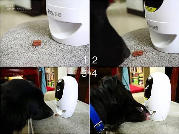 狗狗吃零食.jpg