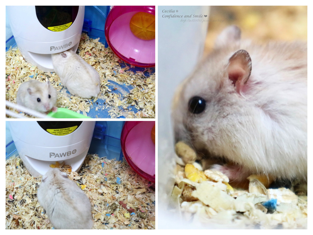 老鼠2.jpg