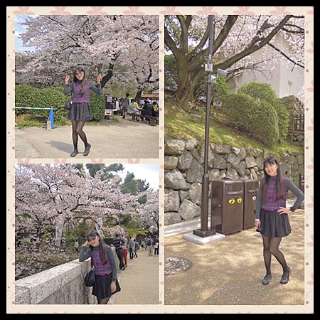 我在名古屋城外櫻花裡