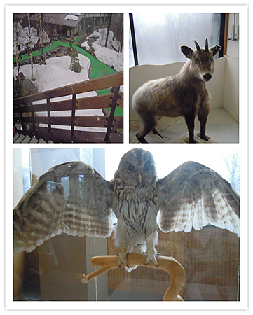 穗高動物生態館