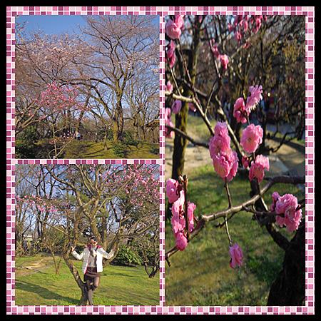 高岡城公園-3.png