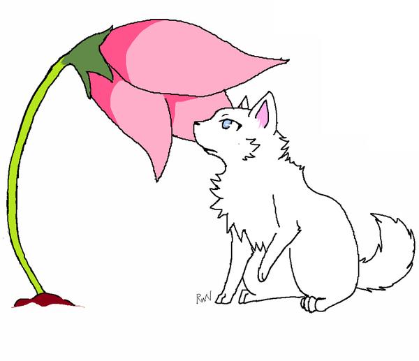 雲狐(奔).png