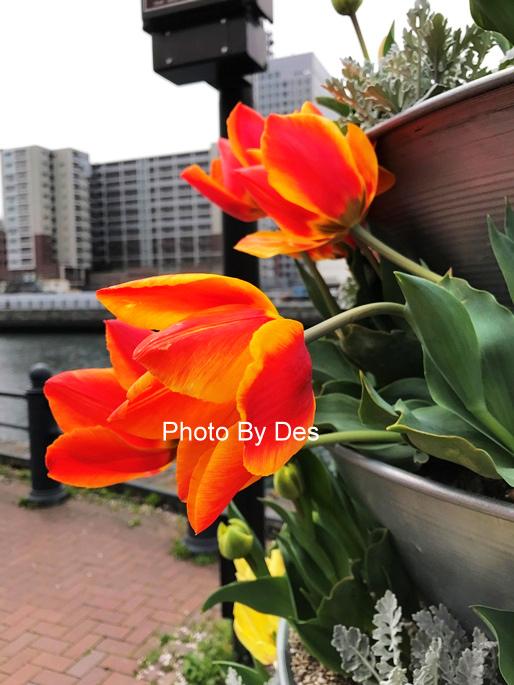 Yokohama_15.JPG