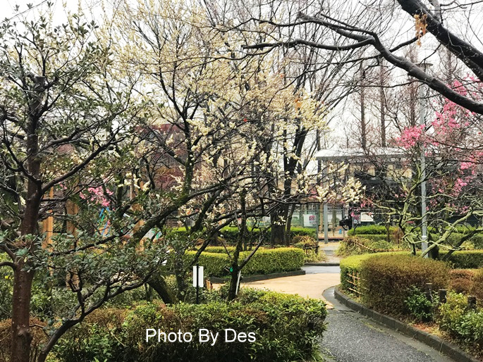 Bairin Park_28.JPG