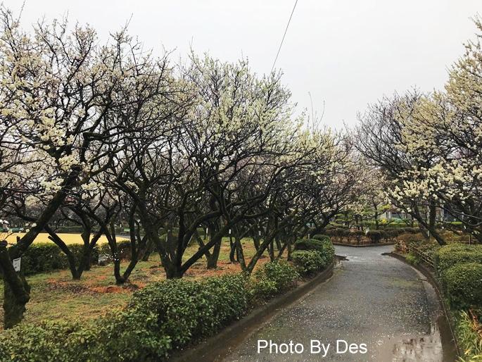 Bairin Park_29.JPG