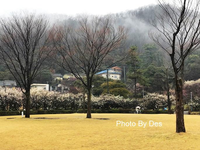 Bairin Park_34.JPG
