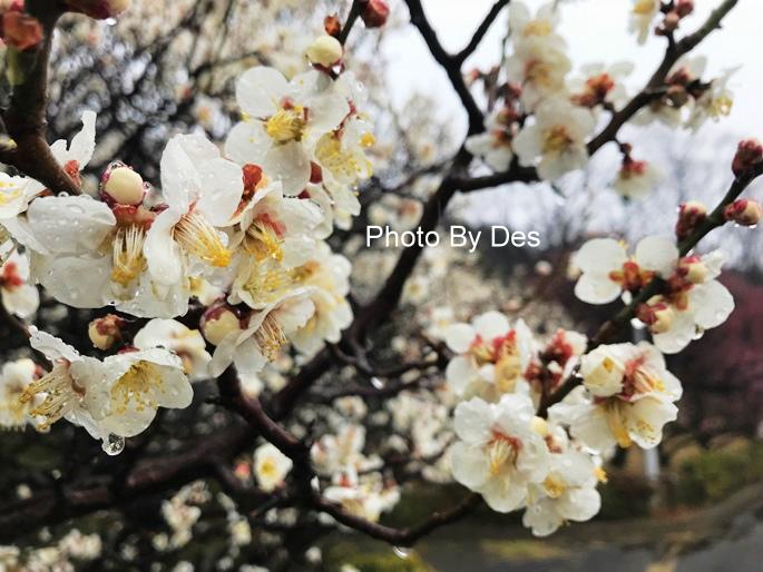 Bairin Park_38.JPG