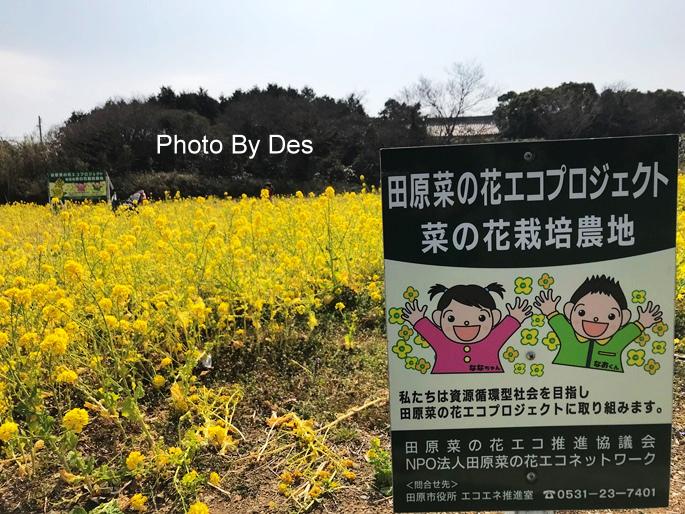SAKURA_38.JPG