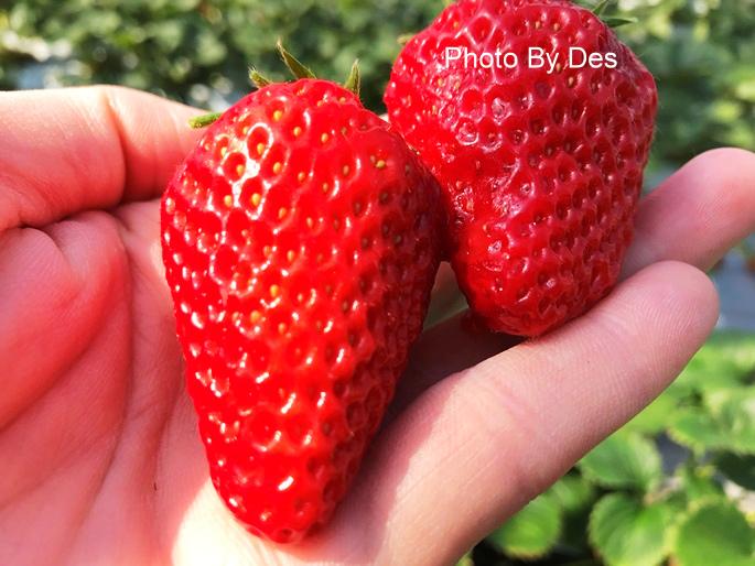 Strawberry_39.JPG