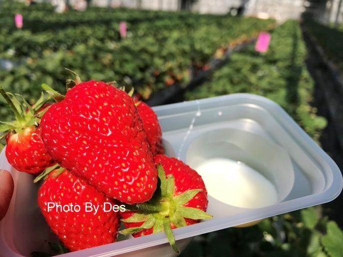 Strawberry_40.JPG