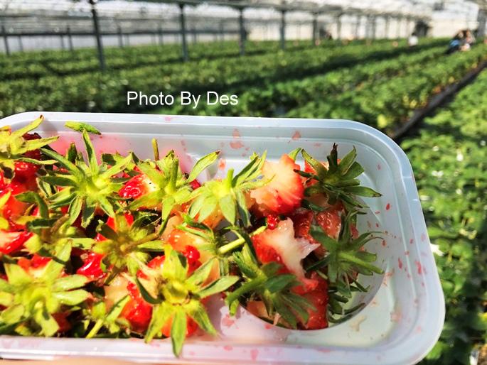 Strawberry_47.JPG