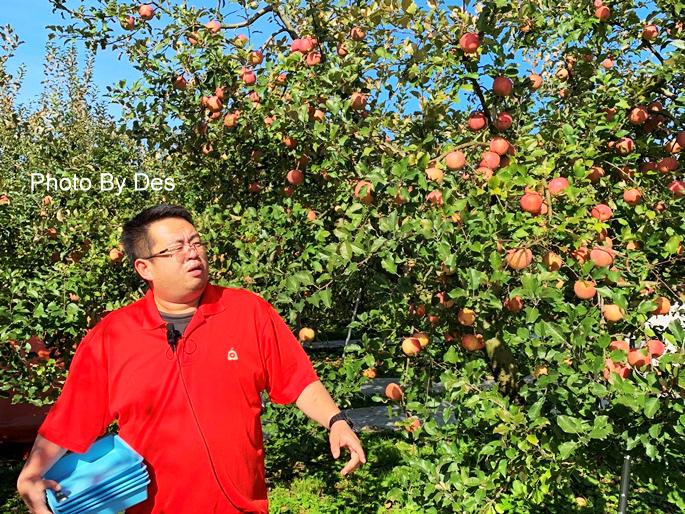 apple_02.JPG