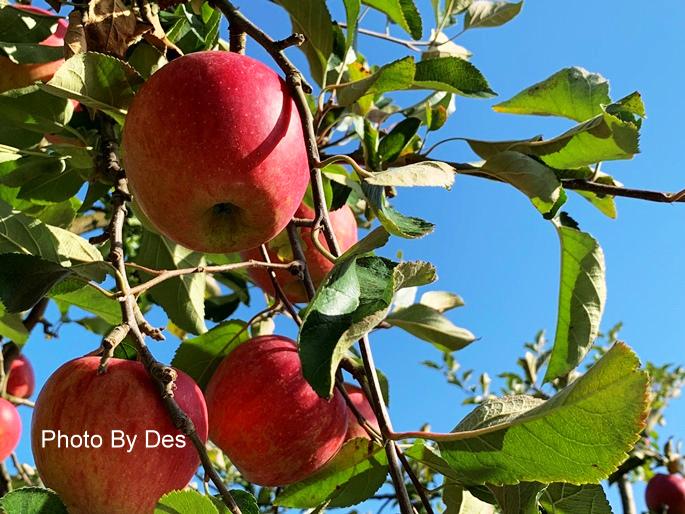 apple_08.JPG