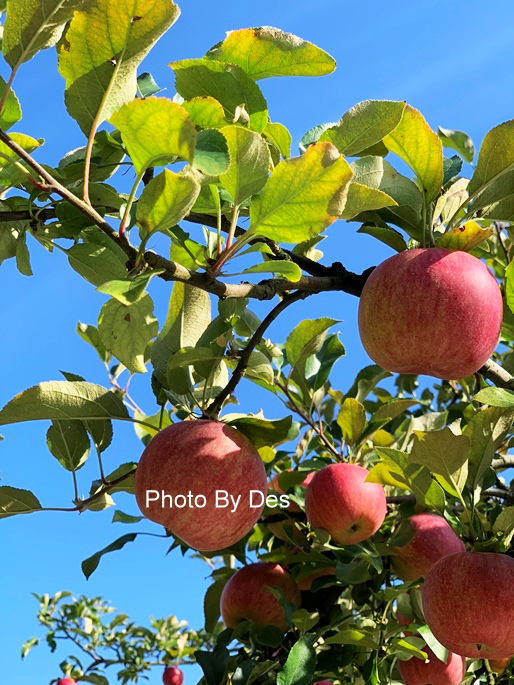 apple_09.JPG