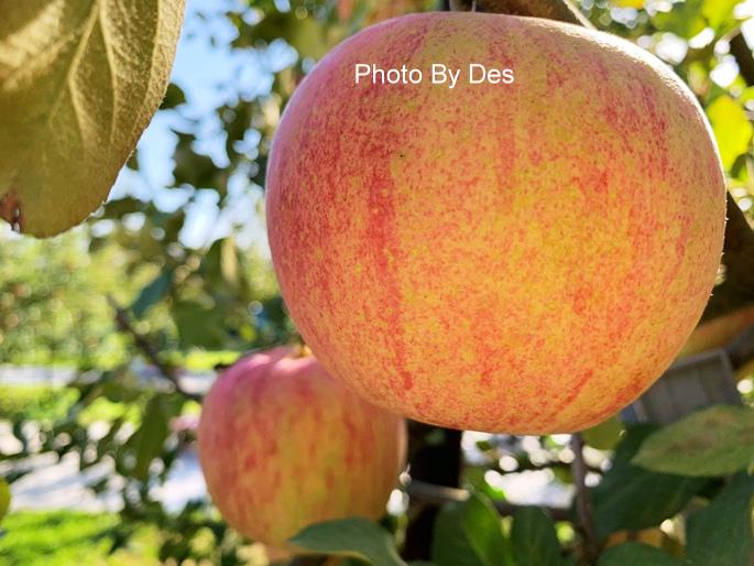 apple_10.JPG
