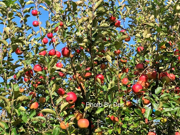 apple_07.JPG