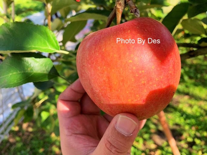 apple_11.JPG